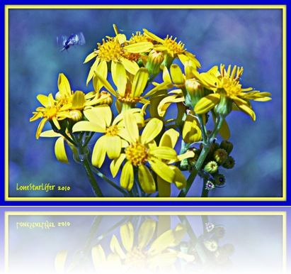yellowflwrs